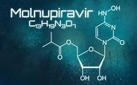 Neue Studiendaten: Molnupiravir schützt Mäuse vor Corona ...