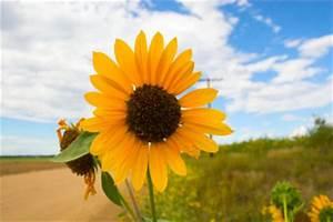 Welche Blumen Blühen Im August : was kann man im august pflanzen anleitung zur gartengestaltung ~ Orissabook.com Haus und Dekorationen