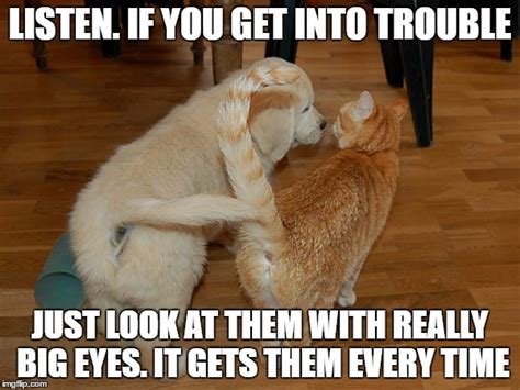 Puppy Memes - cat and dog humor page 9 forums at psych central