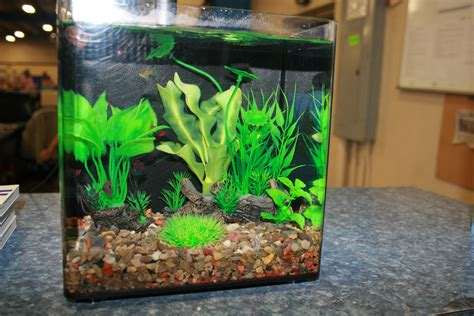aquarium gravel and substrate vs bare bottom tanks pros and cons