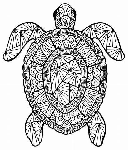 Turtle Coloring Animals Mandalas Pages Zen Stress