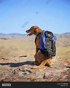 A dog sitting on a mountain top with a canvas backpack for Dog day sitting