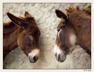 Schlaf Gut Bilder Kostenlos : schlaf gut kleiner foto bild tiere haustiere pferde esel maultiere bilder auf ~ Eleganceandgraceweddings.com Haus und Dekorationen