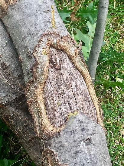 Damage Squirrel Tree Bark Garden Lawn Wbfarmstore