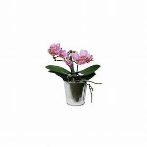 Cache Pot Orchidée : orchid e phalaenopsis rose en fleurs 2 hampes florales cache pot zinc cache pots zinc ~ Teatrodelosmanantiales.com Idées de Décoration