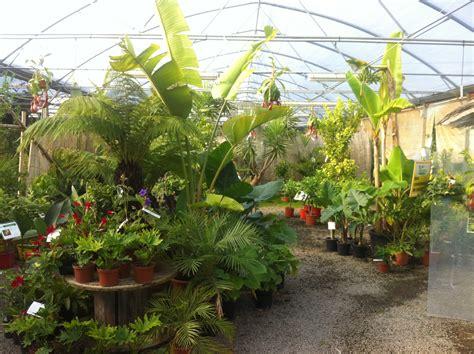 qui sommes nous p 233 pini 232 re ecologique la maison du bananier