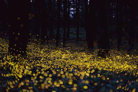 Fireflies Make The Summer Magical  Dejah Beauchamp