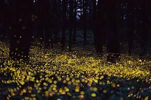Fireflies Make The Summer Magical