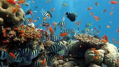 Fish Sea Nature Coral Landscape Desktop Backgrounds