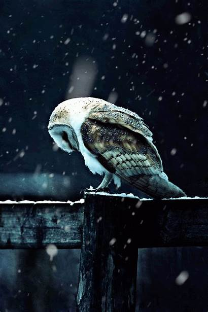 Gifs Seen Imgur Ve Animated Moving Owl