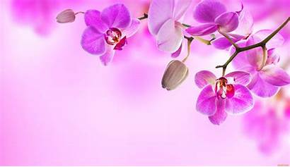 Orchid Wallpapers Background Flowers 4k Backgrounds Computer