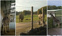 Knowsley Safari, Liverpool - Kids Days Out Reviews