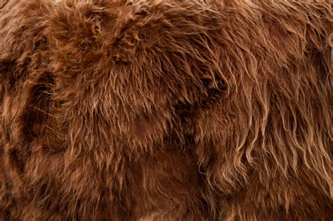 Animal Fur Wallpaper - bull fur background free patternpictures