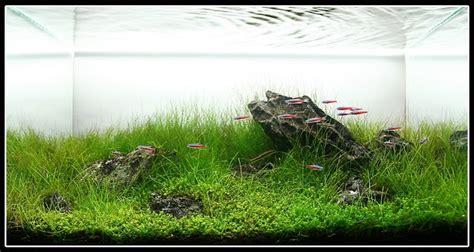 Iwagumi Aquascape by Aquatic Aquascaping Aquarium