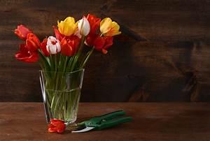 Tulpen In Vase : tulpen anschneiden so bleiben die schnittblumen l nger frisch ~ Orissabook.com Haus und Dekorationen