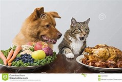 Image result for Dog And Cat eating Vegetables