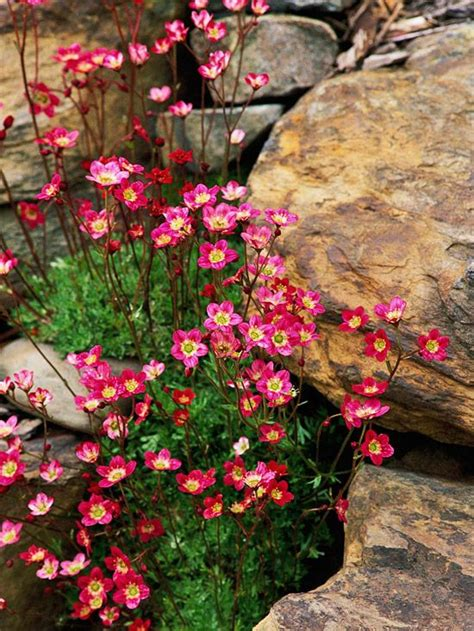 rock garden design ideas gardens perennials and flower
