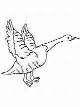 Goose Coloring Flying Canada Geese Drawing Getdrawings Netart Printable Getcolorings sketch template
