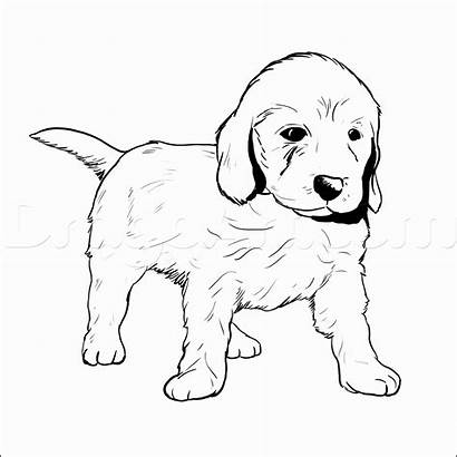 Retriever Golden Coloring Puppy Pages Printable Pup