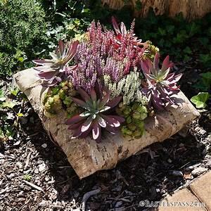 Hohe Pflanzkübel Für Rosen : succulente pflanze k nstlich d21 cm hohe qualit t f r ~ Whattoseeinmadrid.com Haus und Dekorationen
