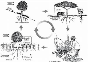 Nutrient Cycling In Agroforestry Systems Source  Modified