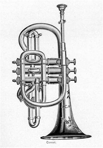 Clip Clipart Musical Instruments Cornet Blanco Negro