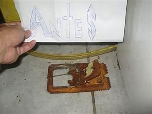 Comment Tuer Un Rat : solutions pratiques pour se d barrasser des souris ~ Melissatoandfro.com Idées de Décoration