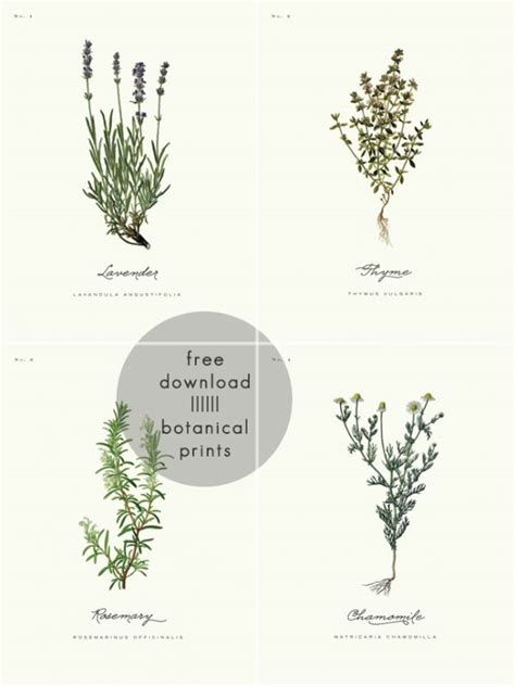 Vitellaria paradoxa, herbarbeleg aus dem herbarium senckenbergianum. Die besten 25+ Herbarium vorlage Ideen auf Pinterest | Jahrgang Blumendrucke, Kegelkerzen und ...