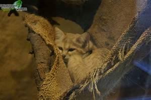 Www Wg Welt De : sandkatze zoo osnabr ck freizeitpark ~ Frokenaadalensverden.com Haus und Dekorationen