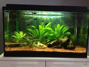 Eheim Aquapro 126 : aquarium von sebastian rusch eheim aquapro 80 ~ Orissabook.com Haus und Dekorationen
