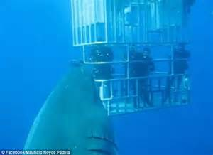 World's Biggest Great White Shark