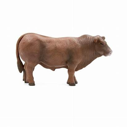 Angus Bull Cow Calf Animals Toys Buster