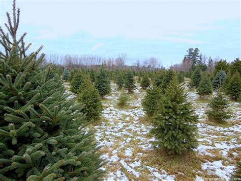christmas tree lot near me around our home our home notebook