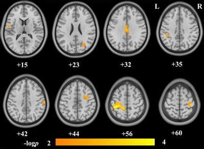 frontiers brain structures   internet