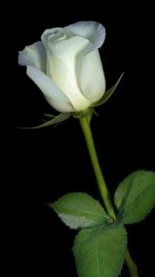 An Ordinary Woman: Bunga Mawar