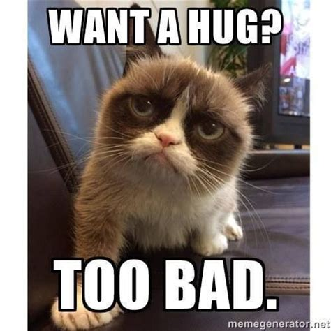Cat Hug Meme - no hugs for you lol this is me me i love pinterest grumpy cat cat and memes