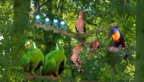 Tittifers In The Garden - talk wikiproject birds archive 15