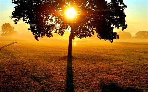 wallpaper sun tree branches light field gate evening