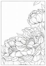 Coloring Bright Drawing Polina Peonies Peony Flower Flowers Drawings Watercolor Sketches Polinabright Oeffnen Zu Malen sketch template