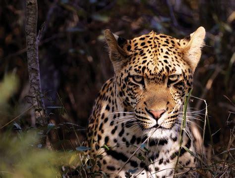 The Big 5 Animals Of Africa