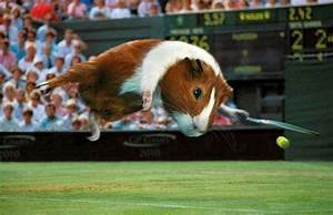 Latest Funny Pictures: Funny Guinea Pig Pictures  Funny