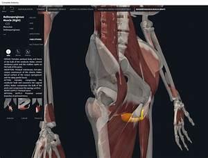 Muscles  U2013 Page 2  U2013 Anatomy  U0026 Physiology