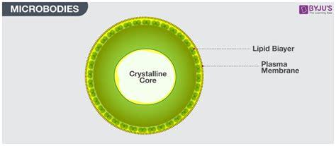 cell organelles mitochondriaplastidsribosomes