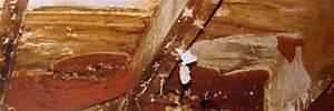 la merule fleau de nos maisons With champignon qui detruit les maisons