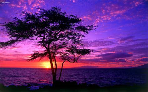 beautiful scenery tree sea sunset hd wallpaper