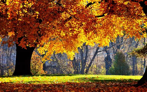 Beautiful Autumn Trees Wallpapers by Wallpapers Beautiful Autumn Scenery Wallpapers
