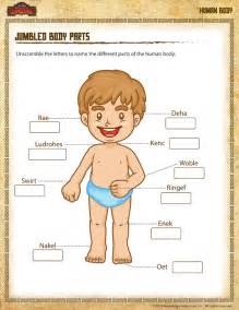 Jumbled Body Parts View  U2013 Worksheet Different Parts Of