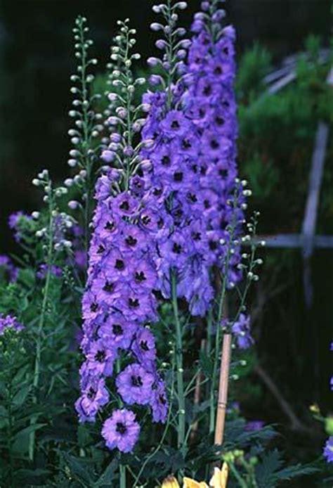 staphysagria  life changing remedy flora fauna flora