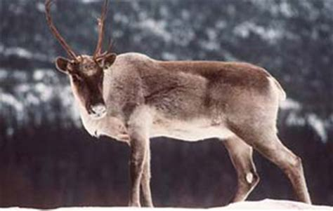 arctic people food hunting tools