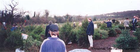christmas tree farm chesham london fresh xmas trees
